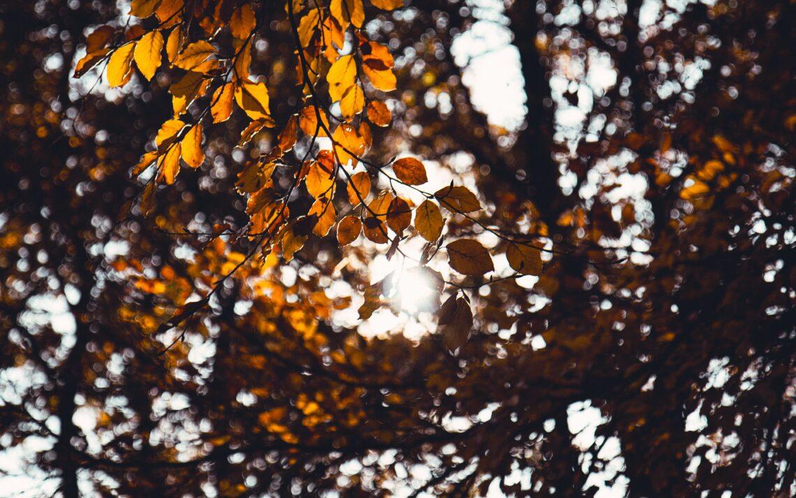 Herfst seizoen